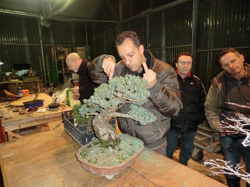 Piegatura di un grosso ramo al Bonsai Club Laudense - Pagina 2 Presid10