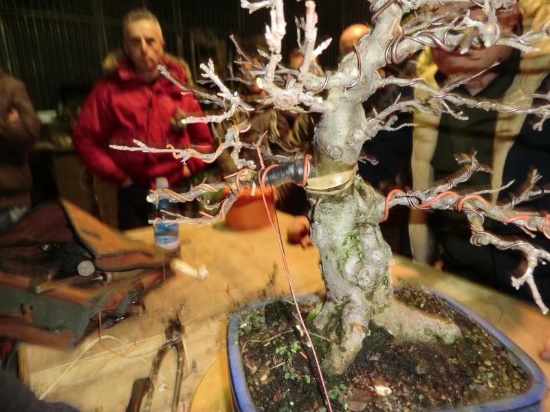 Piegatura di un grosso ramo al Bonsai Club Laudense Ramo_a10