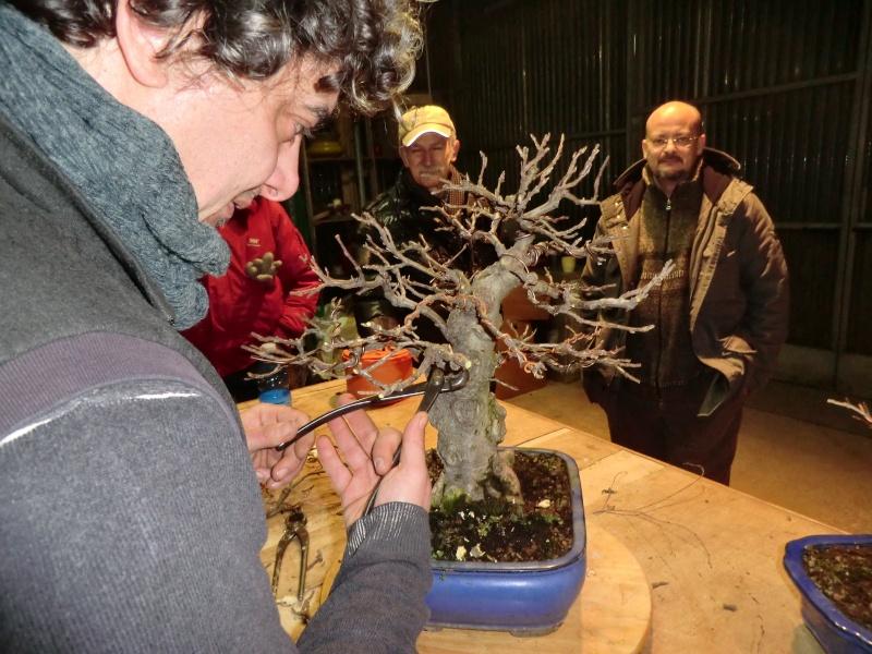 Piegatura di un grosso ramo al Bonsai Club Laudense Sal_cr10