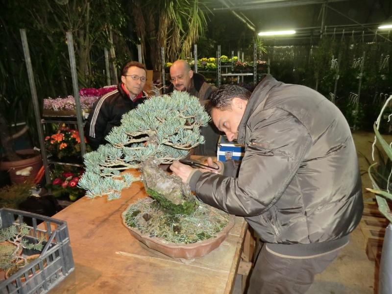 Piegatura di un grosso ramo al Bonsai Club Laudense - Pagina 2 Sistem10