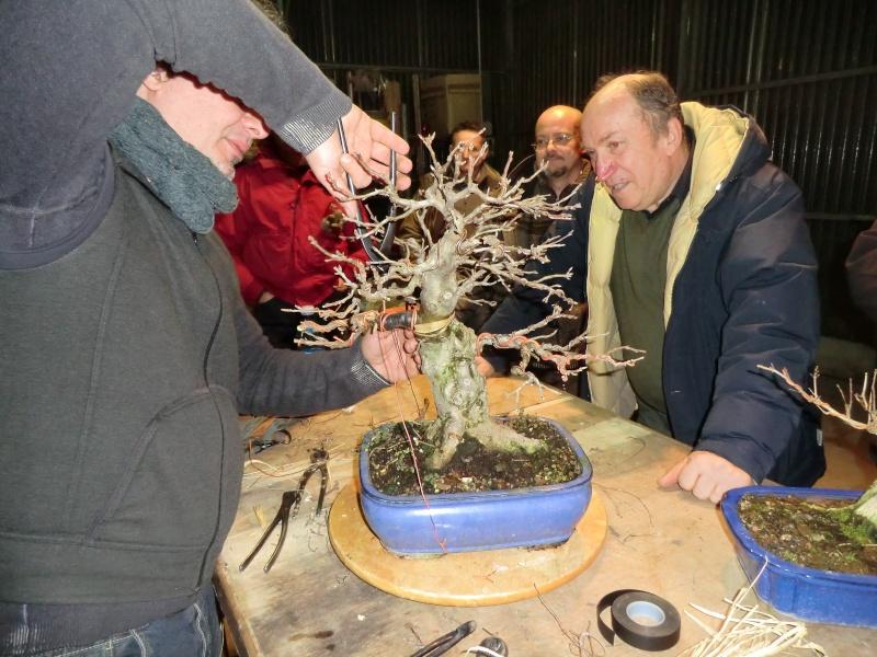 Piegatura di un grosso ramo al Bonsai Club Laudense Ultima10