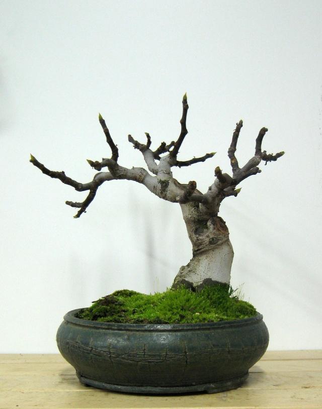 Ficus-Carica - Pagina 4 Img_5018