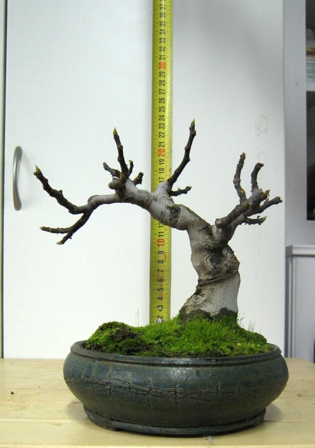 Ficus-Carica - Pagina 4 Img_5022