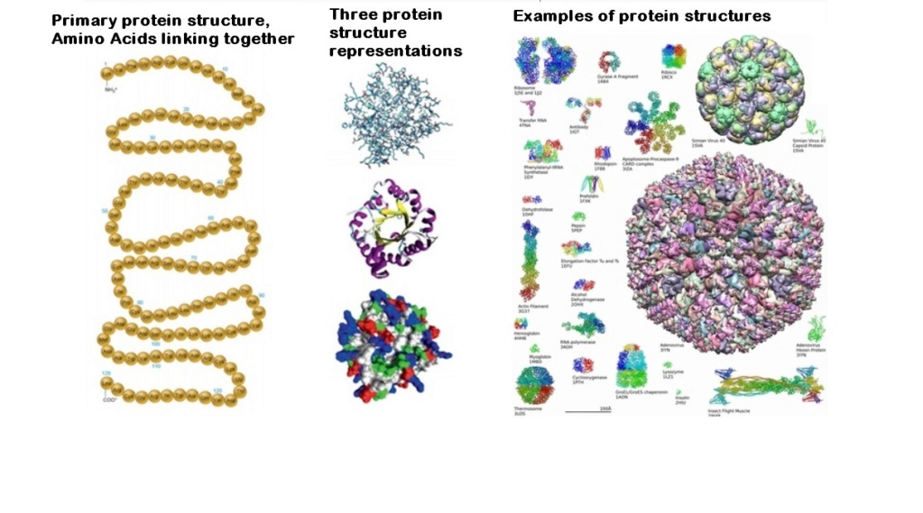 Chemical evolution of amino acids and proteins ? Impossible !! 024