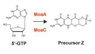 Proteins with molybdenum clusters, essential for life 1024