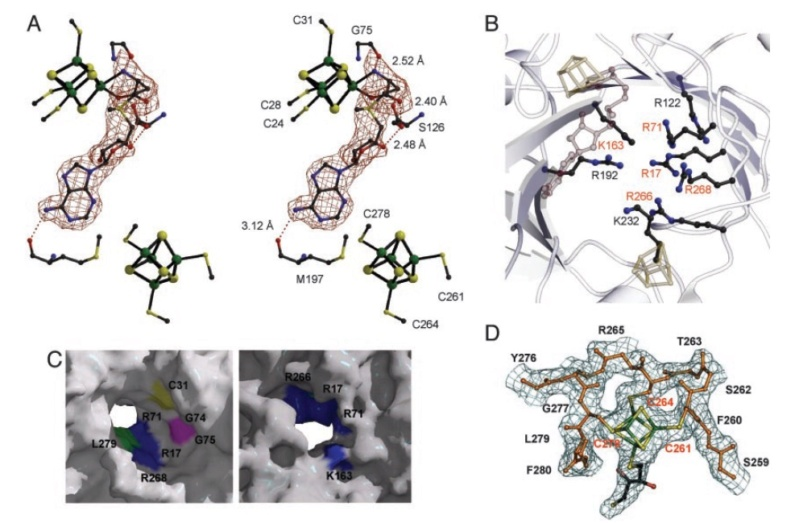 Proteins with molybdenum clusters, essential for life 1127
