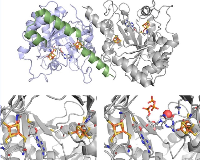 Proteins with molybdenum clusters, essential for life 1228