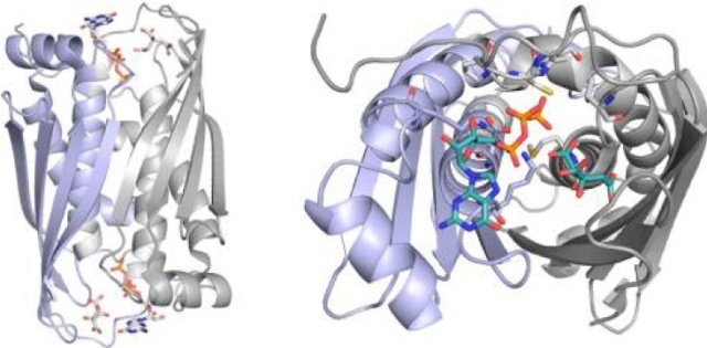 Proteins with molybdenum clusters, essential for life 1326