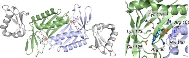 Proteins with molybdenum clusters, essential for life 1522