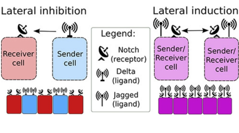 Awe-inspiring biophoton cell-cell communication points to design  1a16