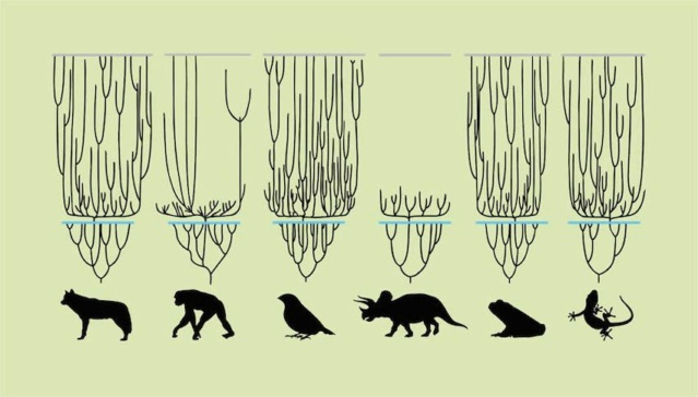 Evidence that all animal species on Earth today emerged about the same time as humans. 1c10b310
