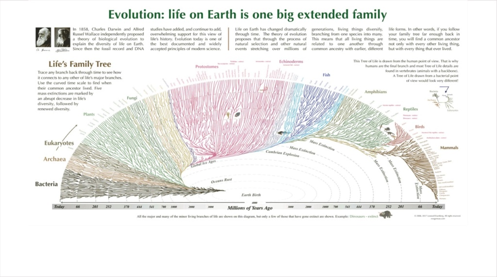 What are the REAL mechanisms of biodiversity, replacing macroevolution?  2317