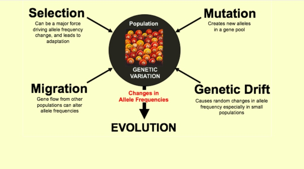 What are the REAL mechanisms of biodiversity, replacing macroevolution?  2416