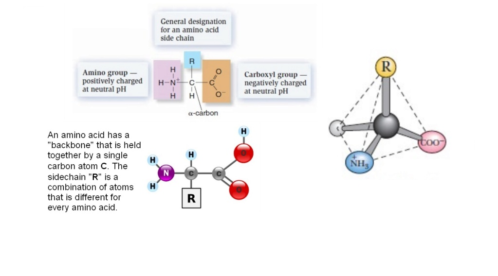 Chemical evolution of amino acids and proteins ? Impossible !! 2718