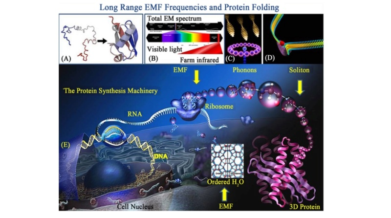Awe-inspiring biophoton cell-cell communication points to design  2719