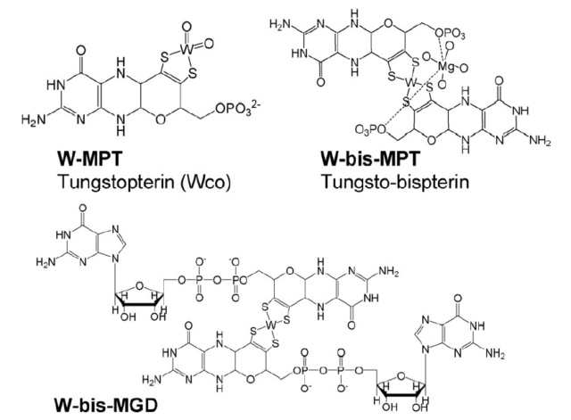 Proteins with molybdenum clusters, essential for life 329