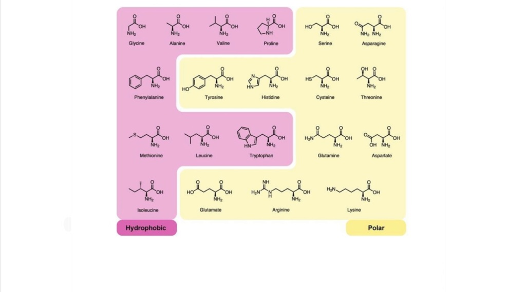 Chemical evolution of amino acids and proteins ? Impossible !! 3321