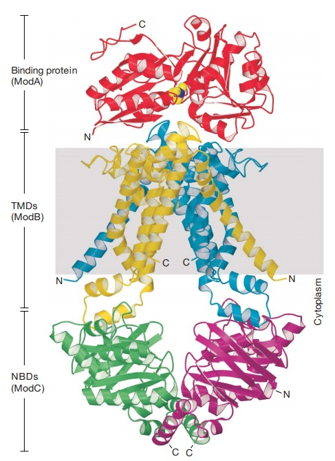 Proteins with molybdenum clusters, essential for life 33ss10
