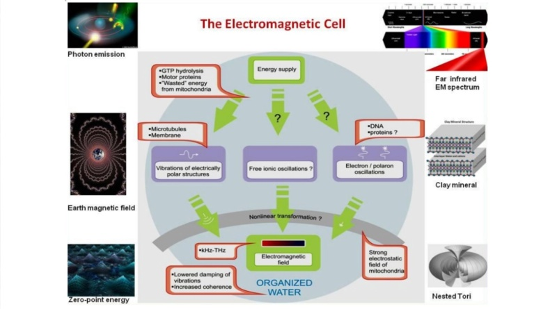Awe-inspiring biophoton cell-cell communication points to design  4017