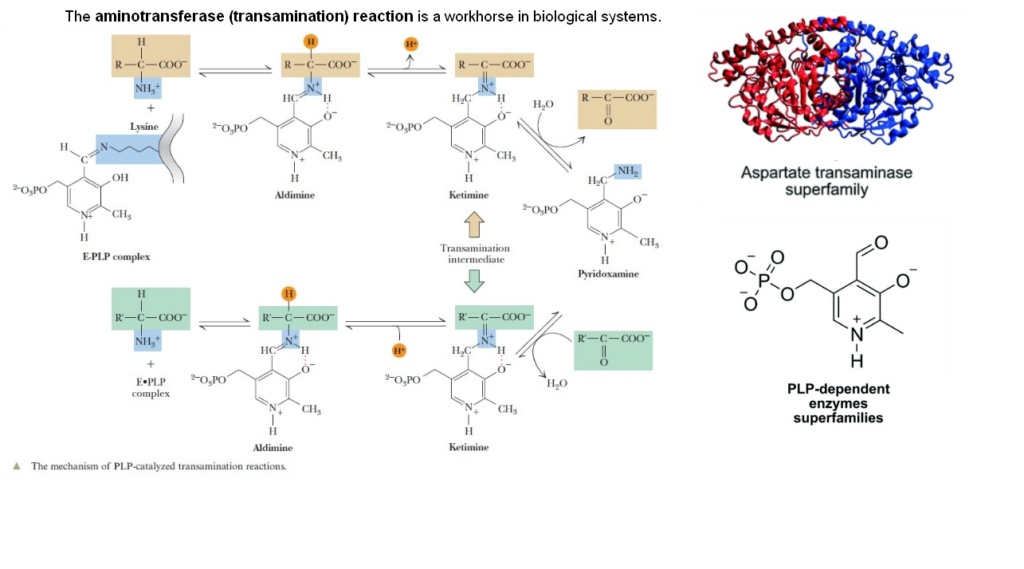 Chemical evolution of amino acids and proteins ? Impossible !! 4614