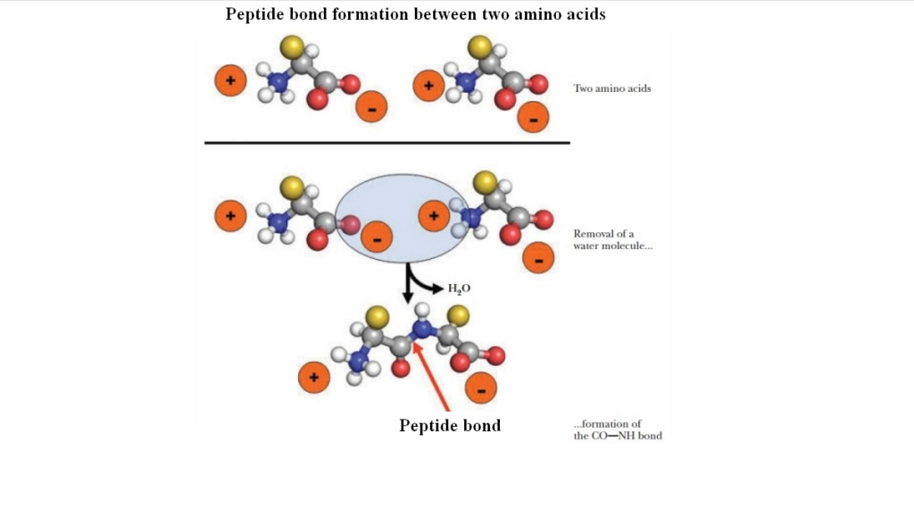Chemical evolution of amino acids and proteins ? Impossible !! 5214