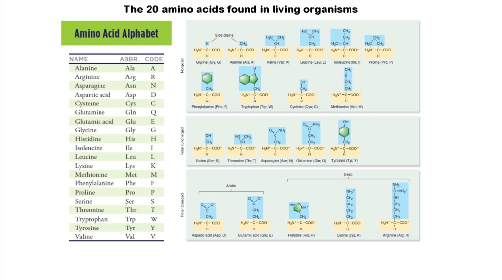 Chemical evolution of amino acids and proteins ? Impossible !! 523