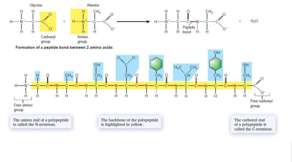 Chemical evolution of amino acids and proteins ? Impossible !! 5314