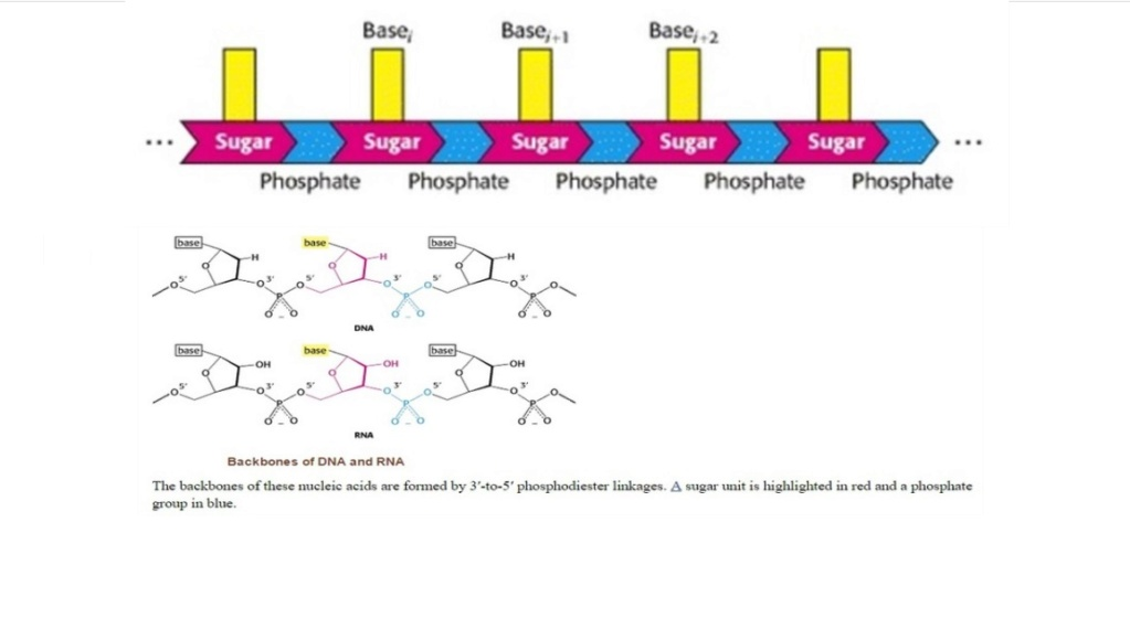 RNA & DNA: It's prebiotic synthesis: Impossible !!  5510