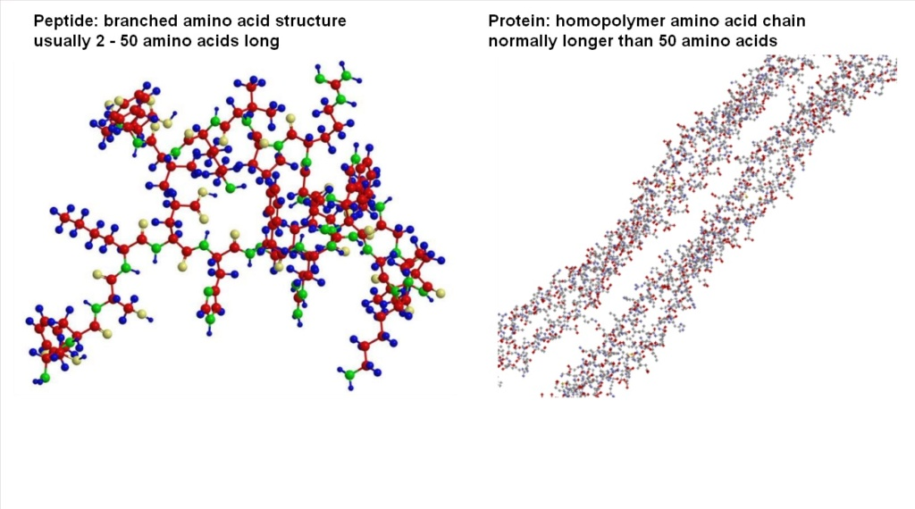 Chemical evolution of amino acids and proteins ? Impossible !! 6712