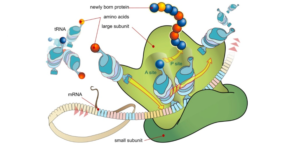 Chemical evolution of amino acids and proteins ? Impossible !! 7211