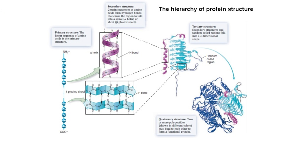Chemical evolution of amino acids and proteins ? Impossible !! 7810
