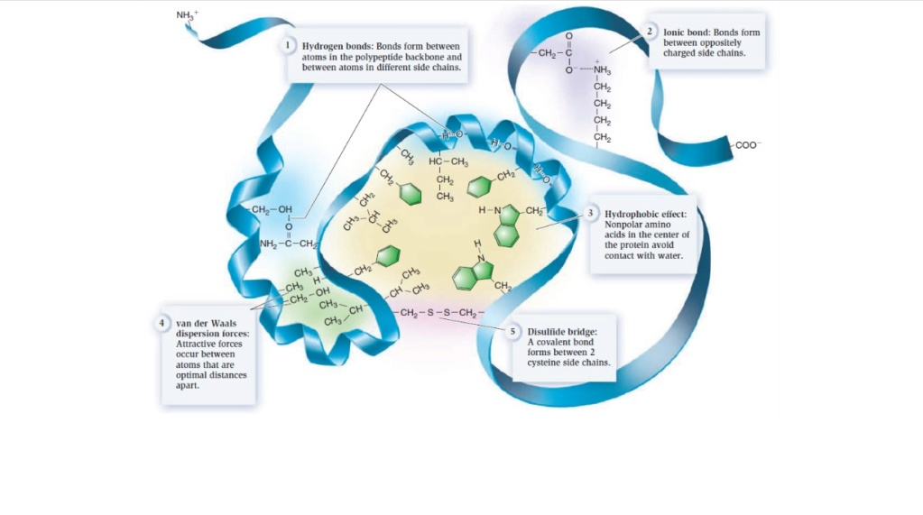 Chemical evolution of amino acids and proteins ? Impossible !! 7912