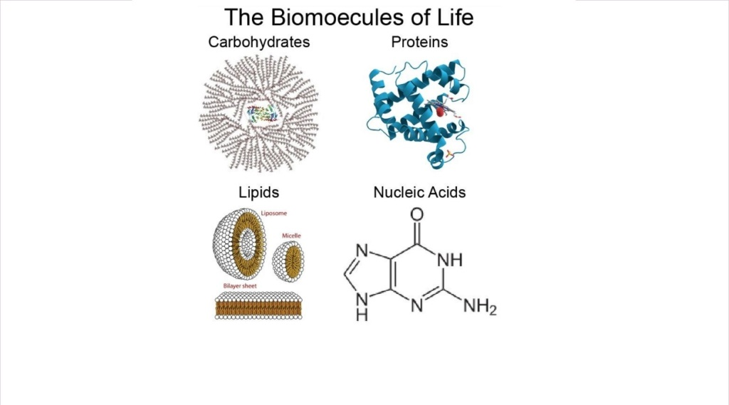 Chemical evolution of amino acids and proteins ? Impossible !! 923