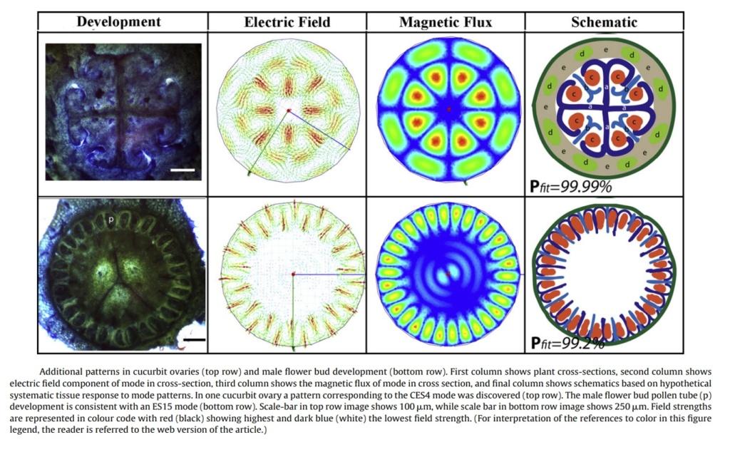 Electromagnetism & Morphogenesis Additi10