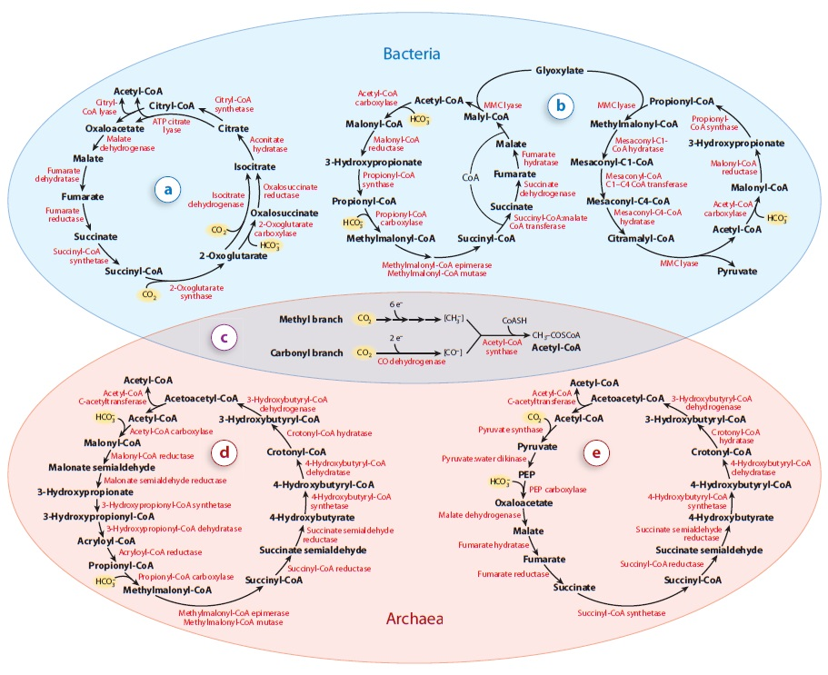 Carbon metabolism is the most basic aspect of life. Altern10