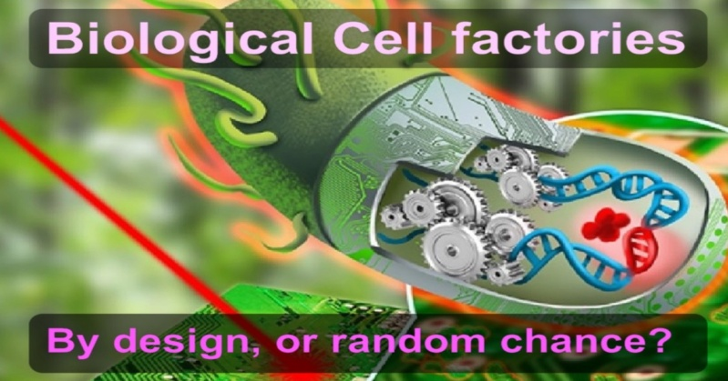 Morphogenesis of eukaryotic cells, structure, and shape: by random chance, or design? Cell_f12