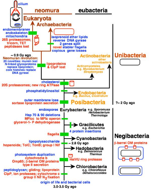 Evolution of bacteria Chloro11