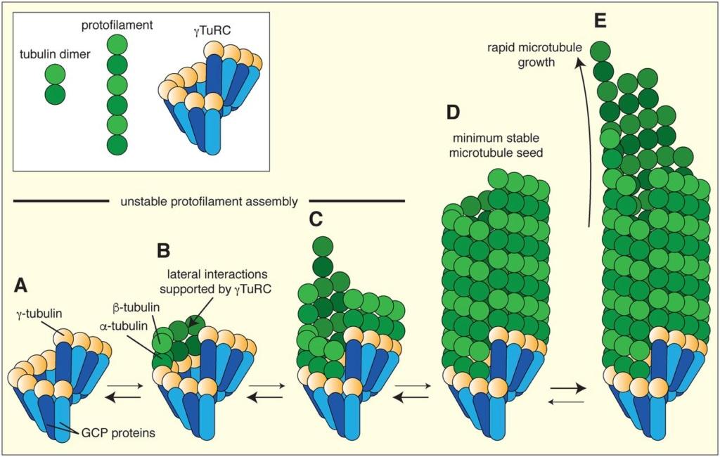 The astonishing  language written on microtubules, amazing evidence of  design Ebc-2010