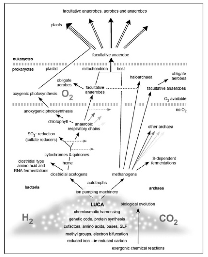 Evolution of bacteria Evolut10