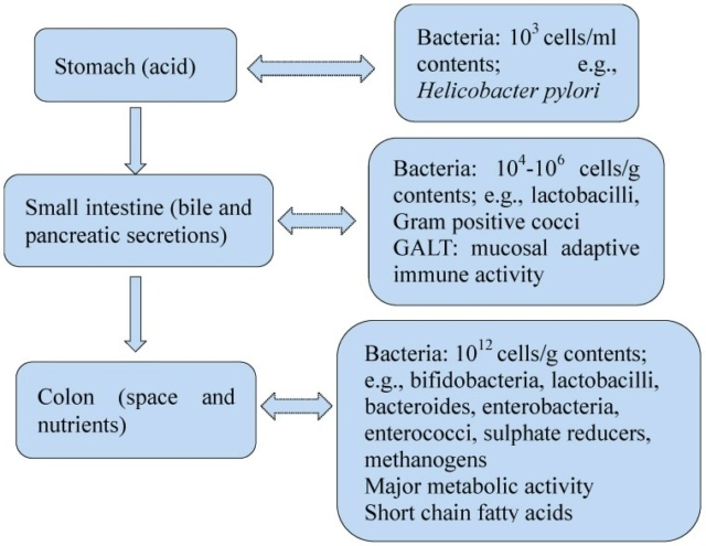 Gut Microbiome Is Crucial for human health Gut_ba10