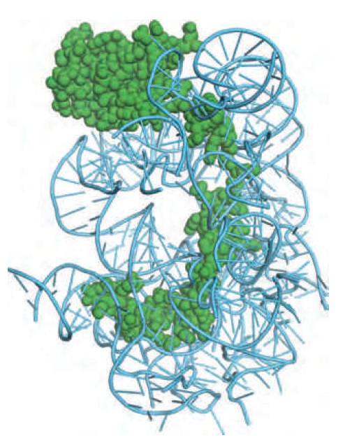 Translation through ribosomes,  amazing nano machines L15_pr10