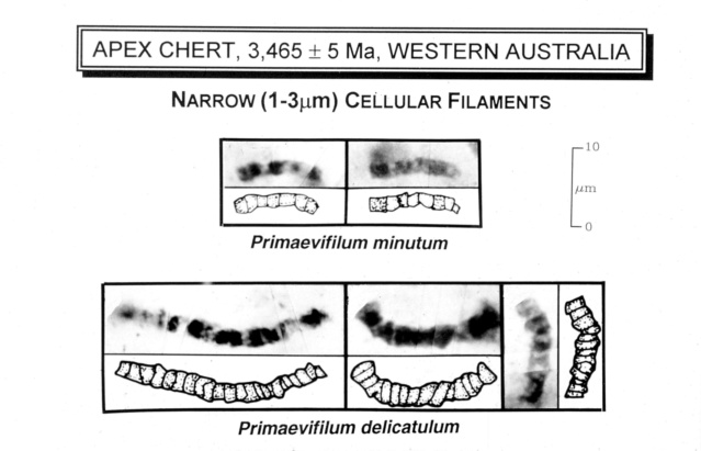 Evolution of bacteria Lifema12