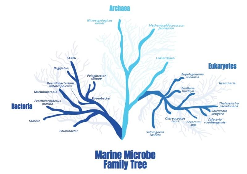 Evolution of bacteria Marine10