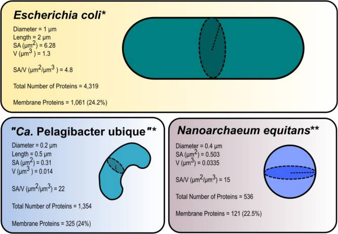 Abiogenesis: What Might Be a Cell's minimal requirement of parts ?  Nanoba10
