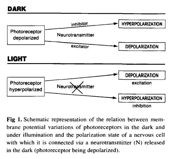 Main topics on the origin of eyes Neurot10