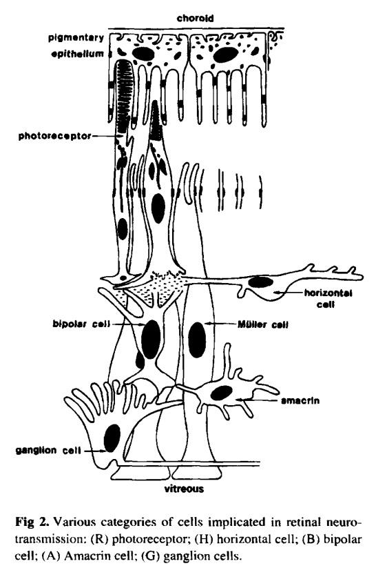 Main topics on the origin of eyes Neurot11