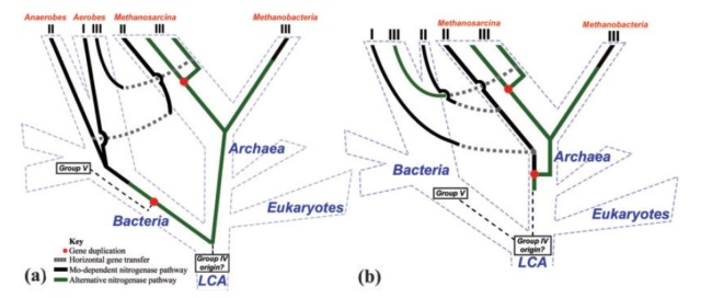 Microorganisms contributing to the Nitrogen Cycle Propos10