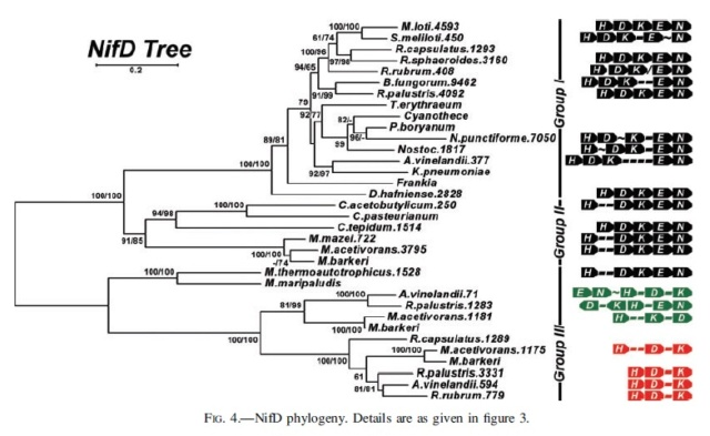 Microorganisms contributing to the Nitrogen Cycle Propos11
