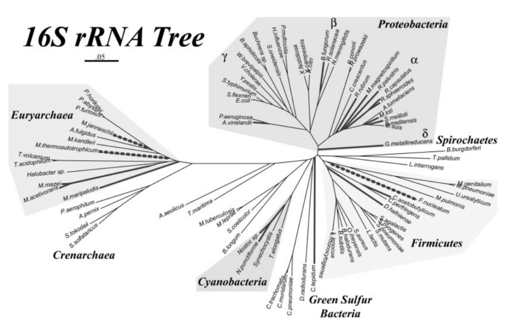 Microorganisms contributing to the Nitrogen Cycle Propos14