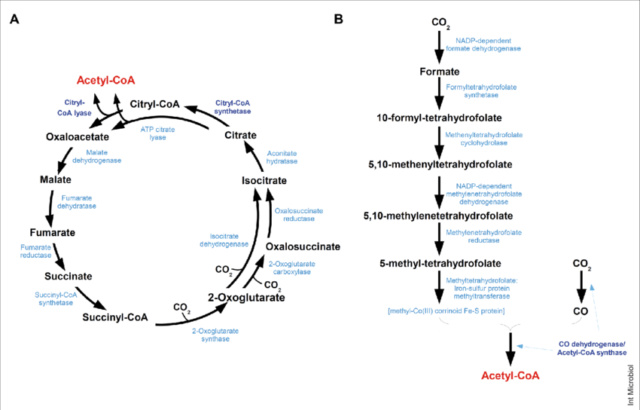 Carbon metabolism is the most basic aspect of life. Reacti10